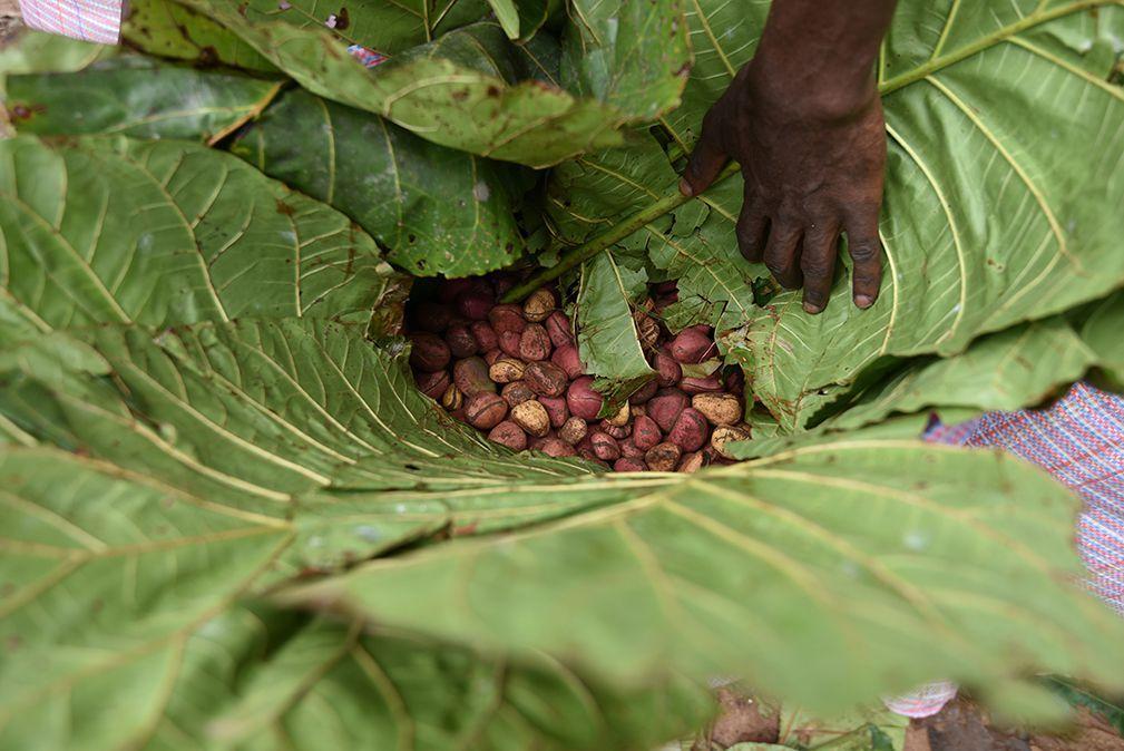 種子と粉末袋の盛り合わせロット